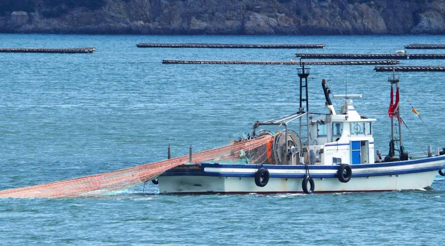 漁獲の様子